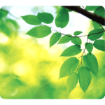 Earth Series™ Mouse Pad Leaves__5903801_Leaves.png