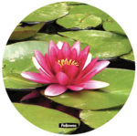 Brite™ Muismat rond - Waterlelie__waterlilly_58829_LH.png