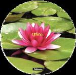 Brite Mat rotondi - Ninfea__waterlilly_58829_LH.png